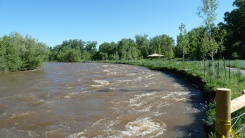 High flow along Poudre River and resulting bank erosion
