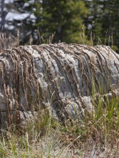 Typical outcrop of the Precambrian Nash Fork Formation. Tectonic forces have tilted the original layers into an upright position while deep-seated physical and chemical processes caused silicification (hardening) of the original lime-mud layers.