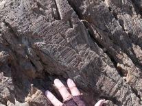 Wyo_Stromatolite 63